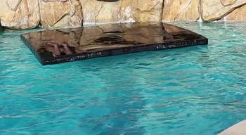 Savior Cover Pool Floating Custom LG 32 x 24 x 4