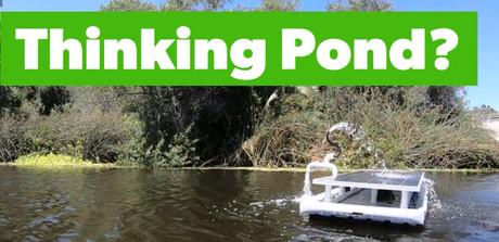 Savior Pond Pod