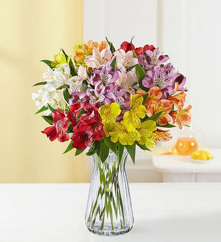 Our beautiful jewel-toned Peruvian lilies are a perfect surprise for someone precious to you. Send an abundant bouquet of 50 blooms.Bouquet of multicolored Peruvian lilies (alstroemeria); features multiple blooms on each stem, approximately 50 in total