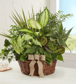 Charming dish garden is hand-crafted with the freshest green plants available