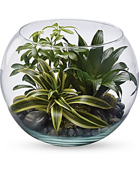 Green schefflera, green compacta dracaena, and variegated green compacta dracaena are arranged with black river rocks and sheet moss.Plants may vary on availability