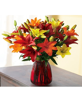 multiple star-shaped blooms on each stem, our fresh orange, red and yellow Asiatic lilies in a red vase