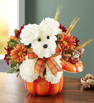 One-sided 3D a-DOG-able® arrangement with white carnations, red and autumn-colored daisy poms; accented with wheat and assorted greenery