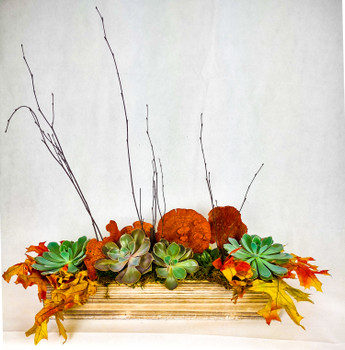 This Succulent arrangement brings in the Fall colors and textures together in a wooden box making it a great piece as table center piece, coffee table or at the office. Low maintenance yet unique and colorful will be a great addition to any space