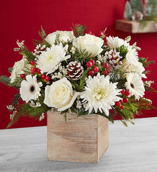 Arrangement with white roses, Gerbera daisies, mums ; accented with red hypericum berries, assorted Christmas greenery and pinecones
