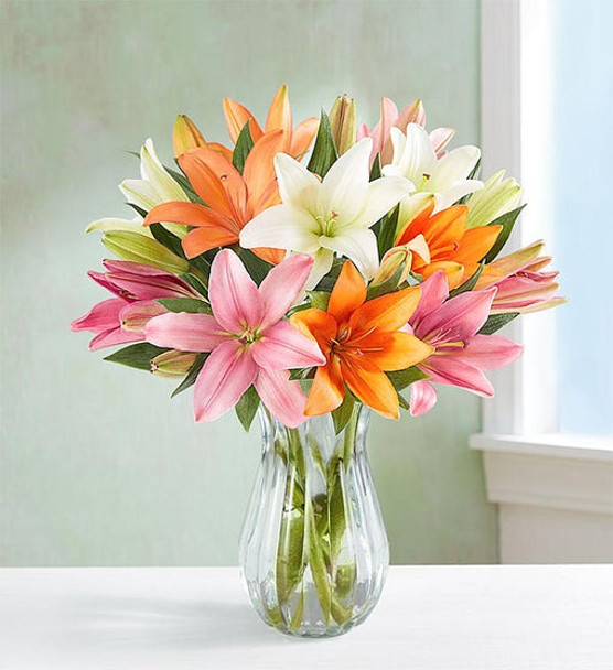 Gathering of orange, pink and white Asiatic lilies
