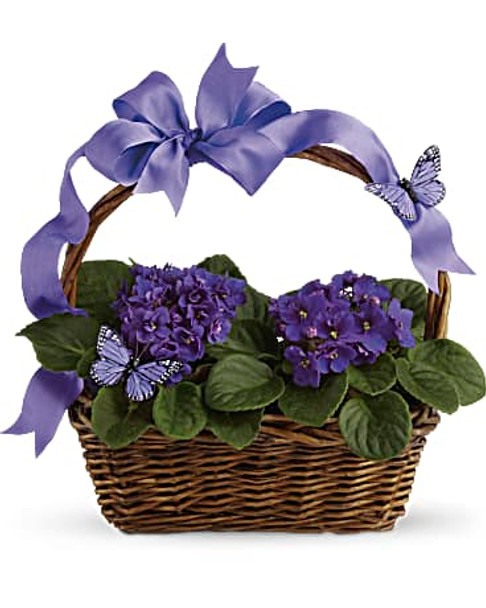 Two decorative butterflies and pretty purple ribbon swirl around a gift basket bearing two blue flowering African violet plants.