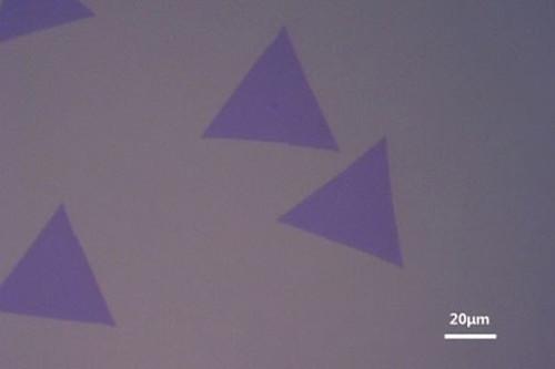 CVD-Grown MoS2 film (10mm*10mm)