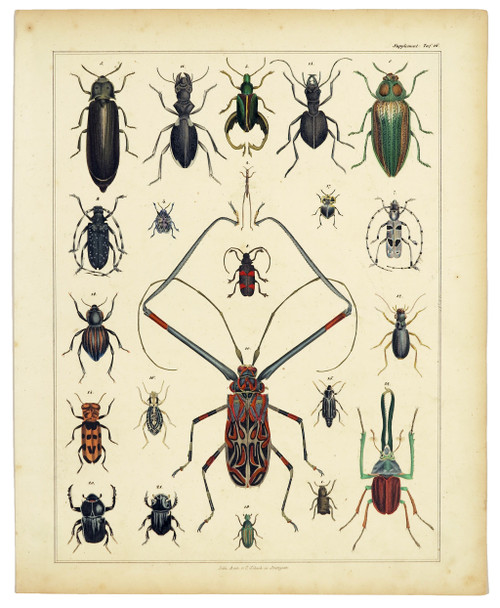 """""""Insects"""", Original Hand-colored Engraving Circa 1843"""