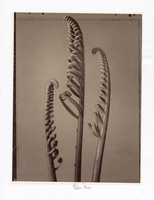"""Palm Fern"", Photographic Print by Tom Baril"