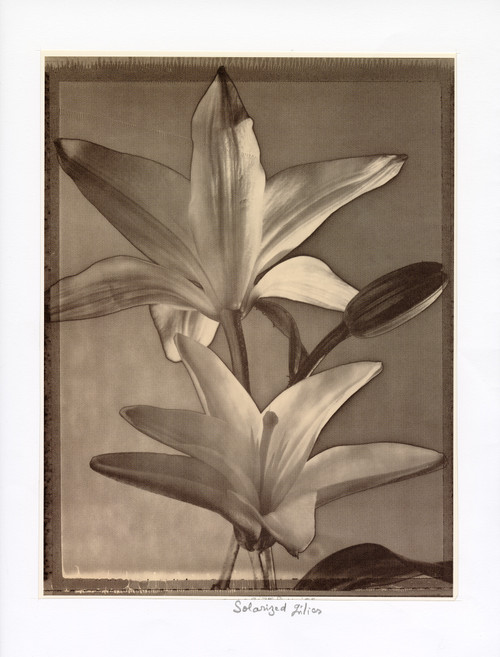"""Solarized Lilies"", Photographic Print by Tom Baril"