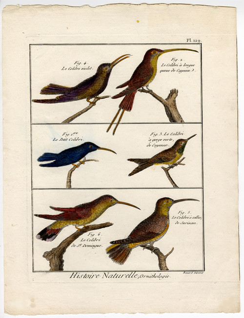 """Le Colibri"", Original 18th Century Engravings"
