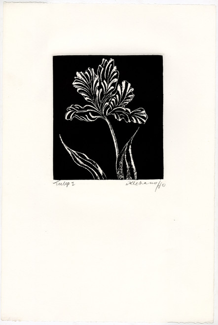 """Tulip I"", Original Etching by Anita Klebanoff"