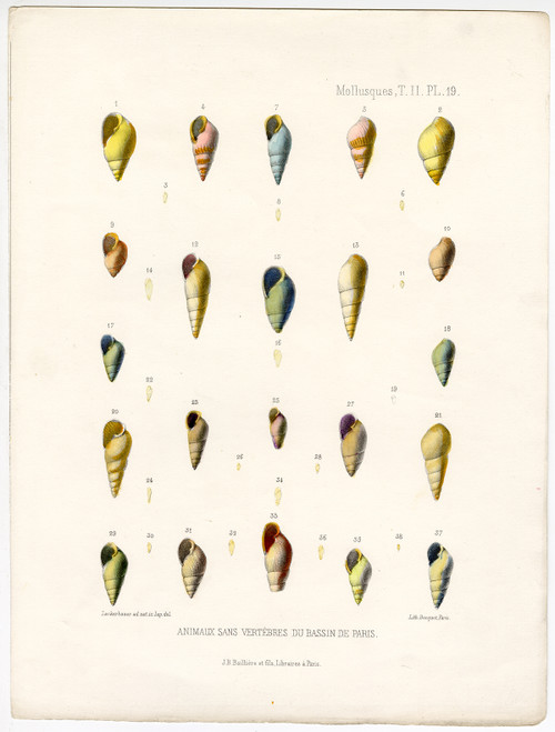 """Mollusques, PL 19"", Hand-Colored Mollusk Shells, Circa 1865"