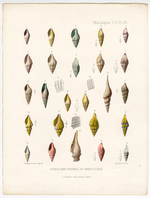 """Mollusques, PL 96"", Hand-Colored Mollusk Shells, Circa 1865"