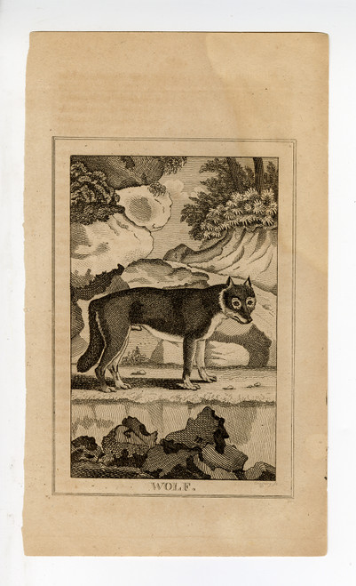 """Wolf"", Late 18th Century Copperplate Engraving (SOLD)"