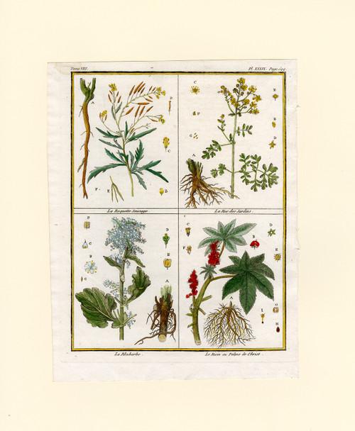 """""""Le Ricin ou Palme de Christ"""" - Original Botanical Engraving Circa 1789"""