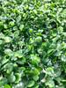 "24"" Artificial Green Foliage Grass Wall Panel"