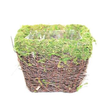 """5.25"""" Square Moss Planter"""