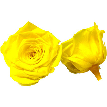 Yellow Preserved Roses - 4-5cm - 6 Pack