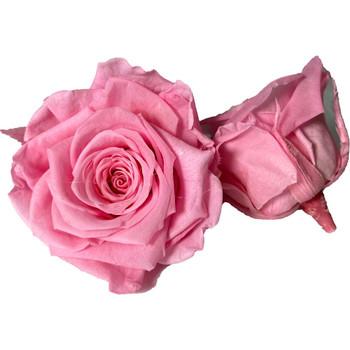 Pink Preserved Roses - 4-5cm - 6 Pack