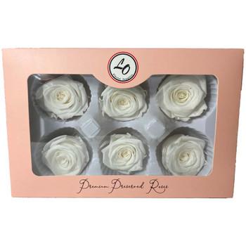 White Preserved Roses - 4-5cm - 6 Pack