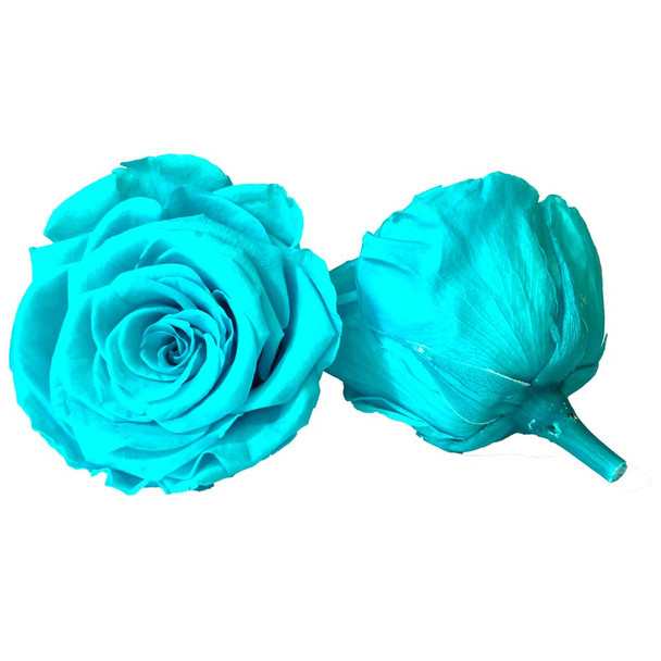 Tiffany Blue Preserved Roses - 4-5cm - 6 Pack