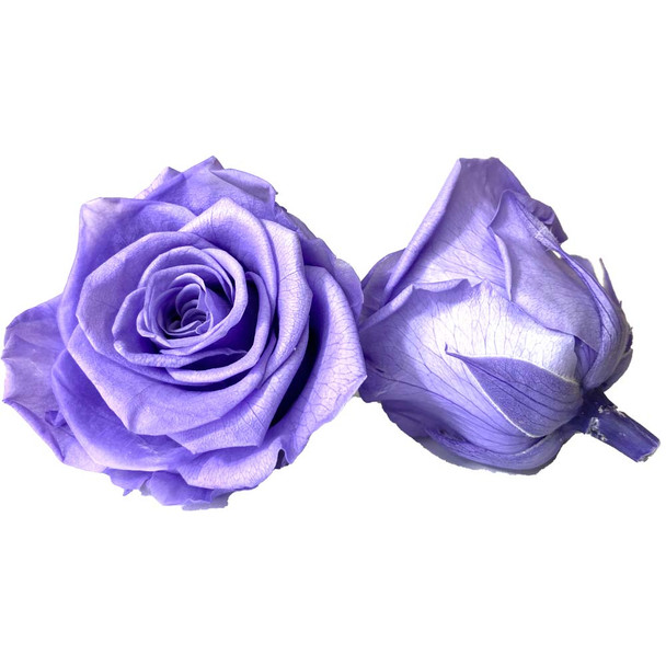 Lavender Preserved Roses - 4-5cm - 6 Pack