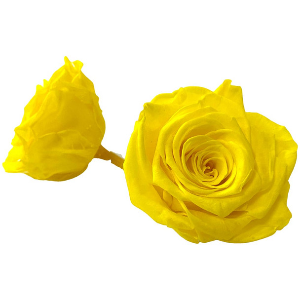 Yellow Preserved Roses - 6-7cm - 5 Pack