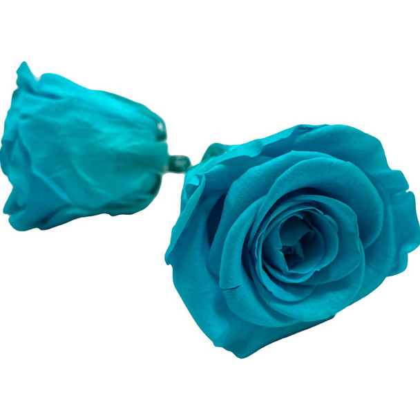 Tiffany Blue Preserved Roses - 3-4cm - 10 Pack