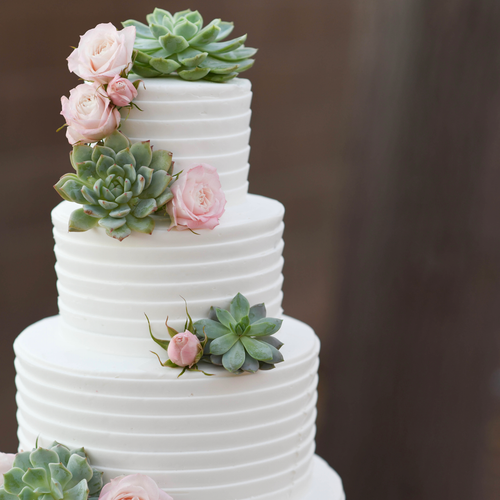 Textured Buttercream Succulent Cake