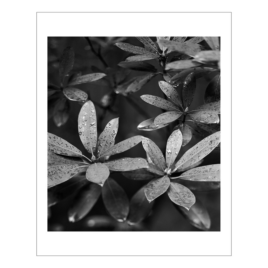 4x5 Plants