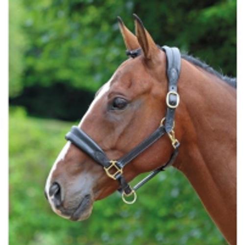 Shires Equestrian Blenheim Cushioned Travel Headcollar