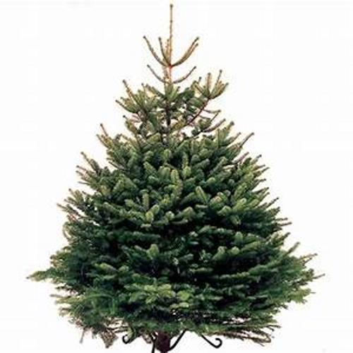 Norwegian Christmas Trees