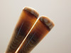 Fossilized Wood Matched Pairs Cabochons Washington #7