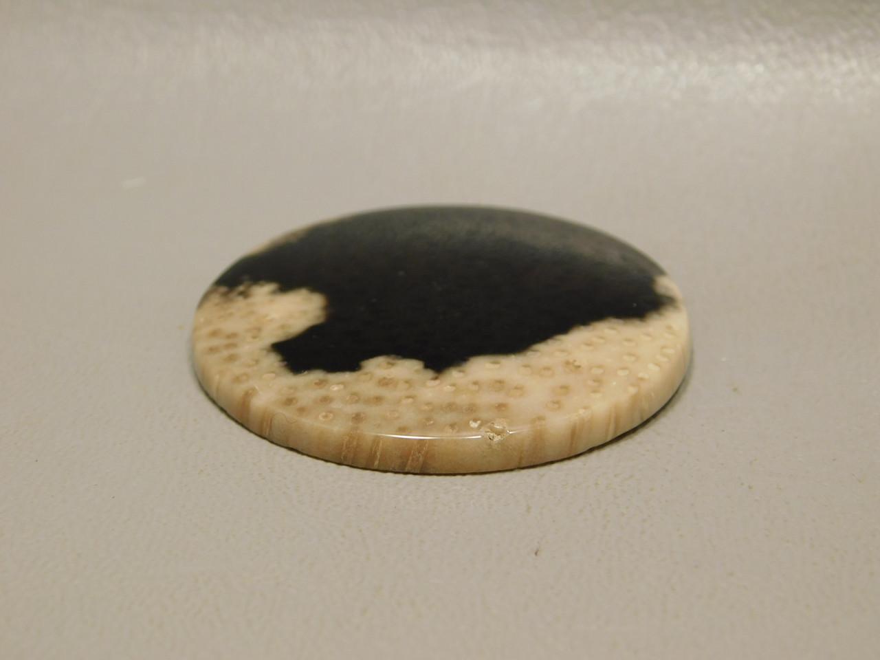 Petrified Palm Wood 41 mm Round Semiprecious Stone Cabochon #4