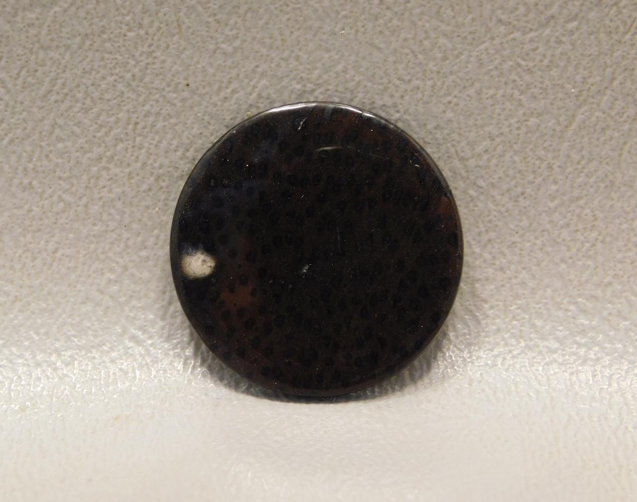 Petrified Palm Wood Brown Black Moonscape Cabochon Gemstone #3