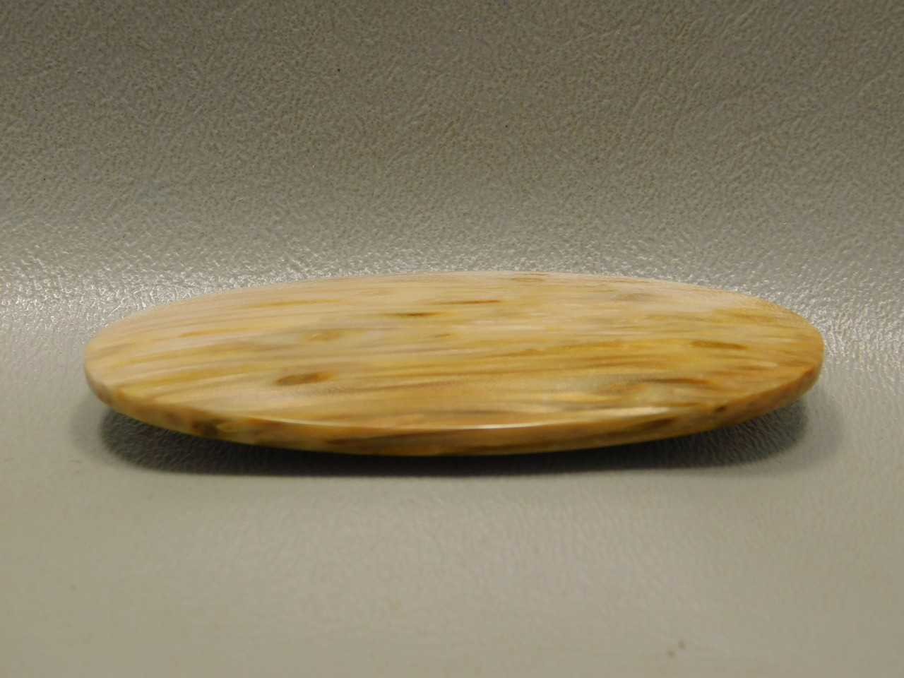 Petrified Palm Wood 3 inch Large Collector Designer Cabochon XL13