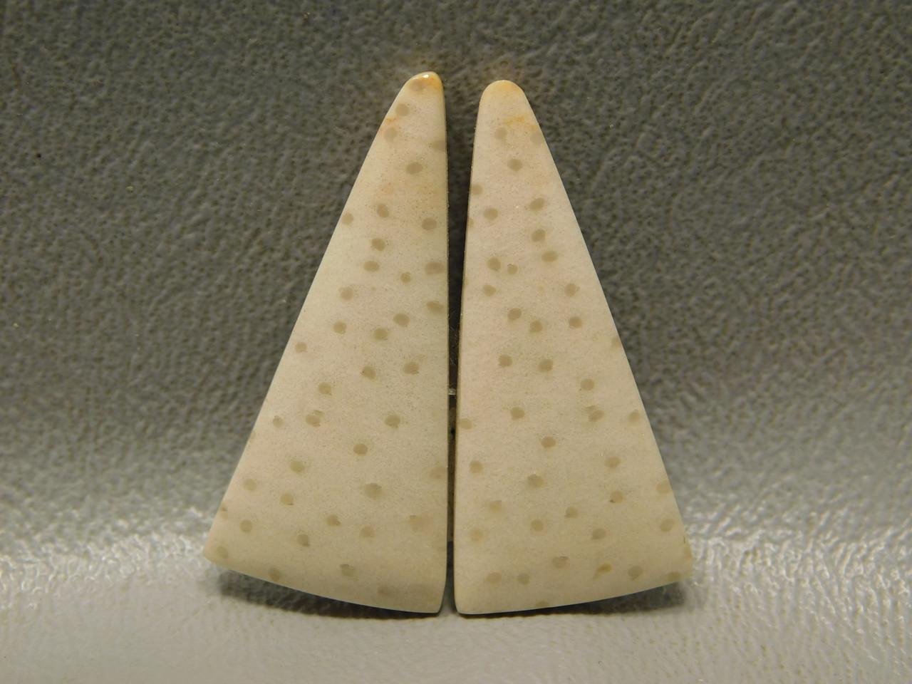Fossil Palm Wood Matched Pair Polka Dots Tan Cabochons #12