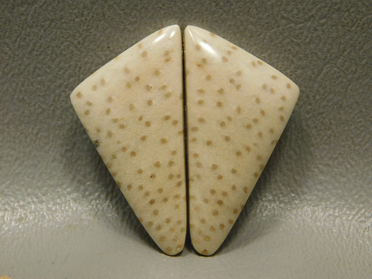Petrified Palm Wood Matched Pair Triangle Spotted Cabochon #13