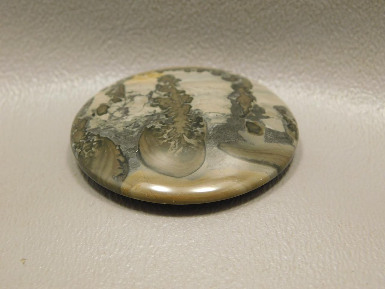 Cotham Marble Fossil Stromatolite Stone Cabochon Jewelry Supply #18
