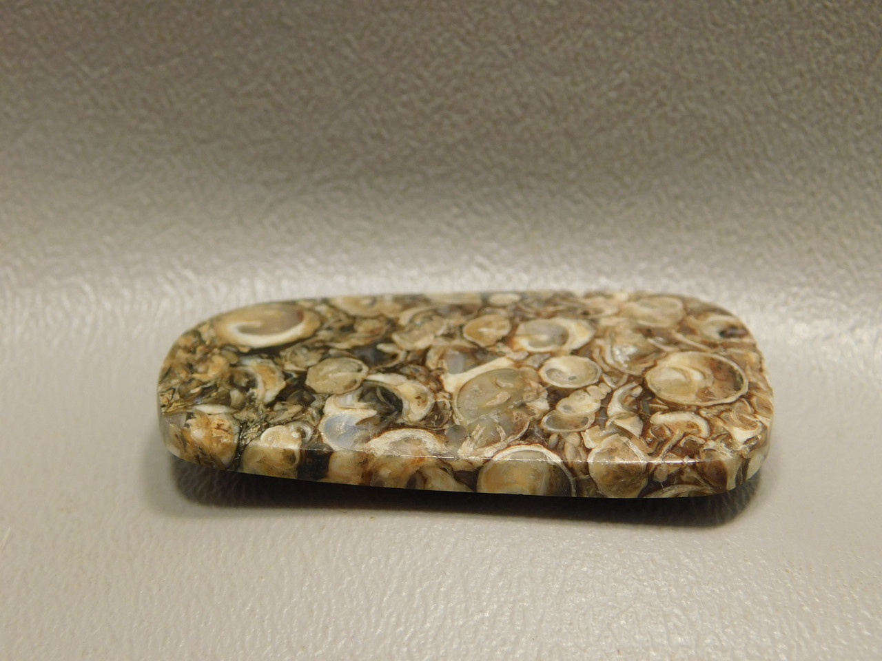 Turritella Agate Miocene Fossil Cabochon Jewelry Making Supplies #7