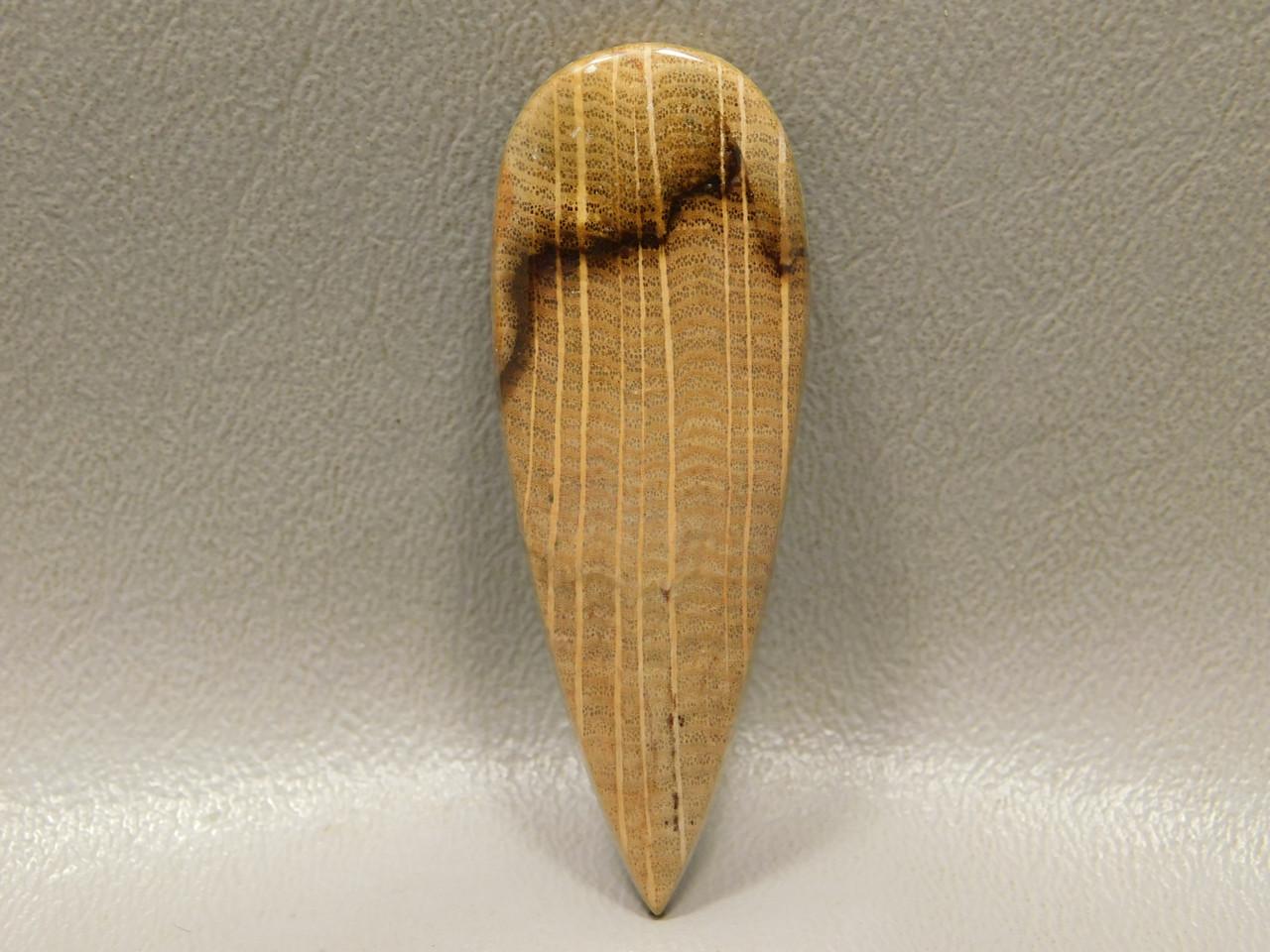 Petrified Golden Oak Wood Designer Cabochon Stone #2