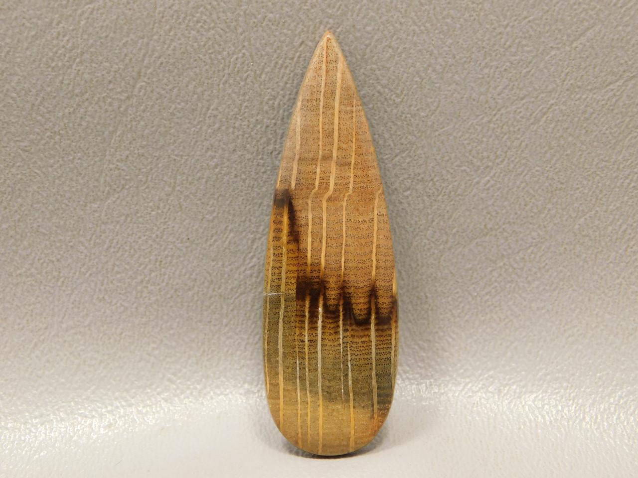 Petrified Golden Oak Wood Cabochon Stinking Water Stone #17