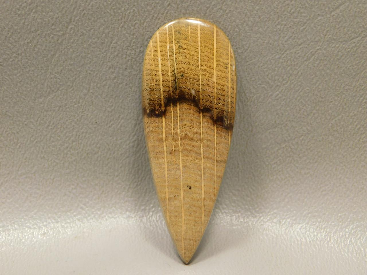 Petrified Golden Oak Fossil Wood Cabochon Wirewrap Stone #14