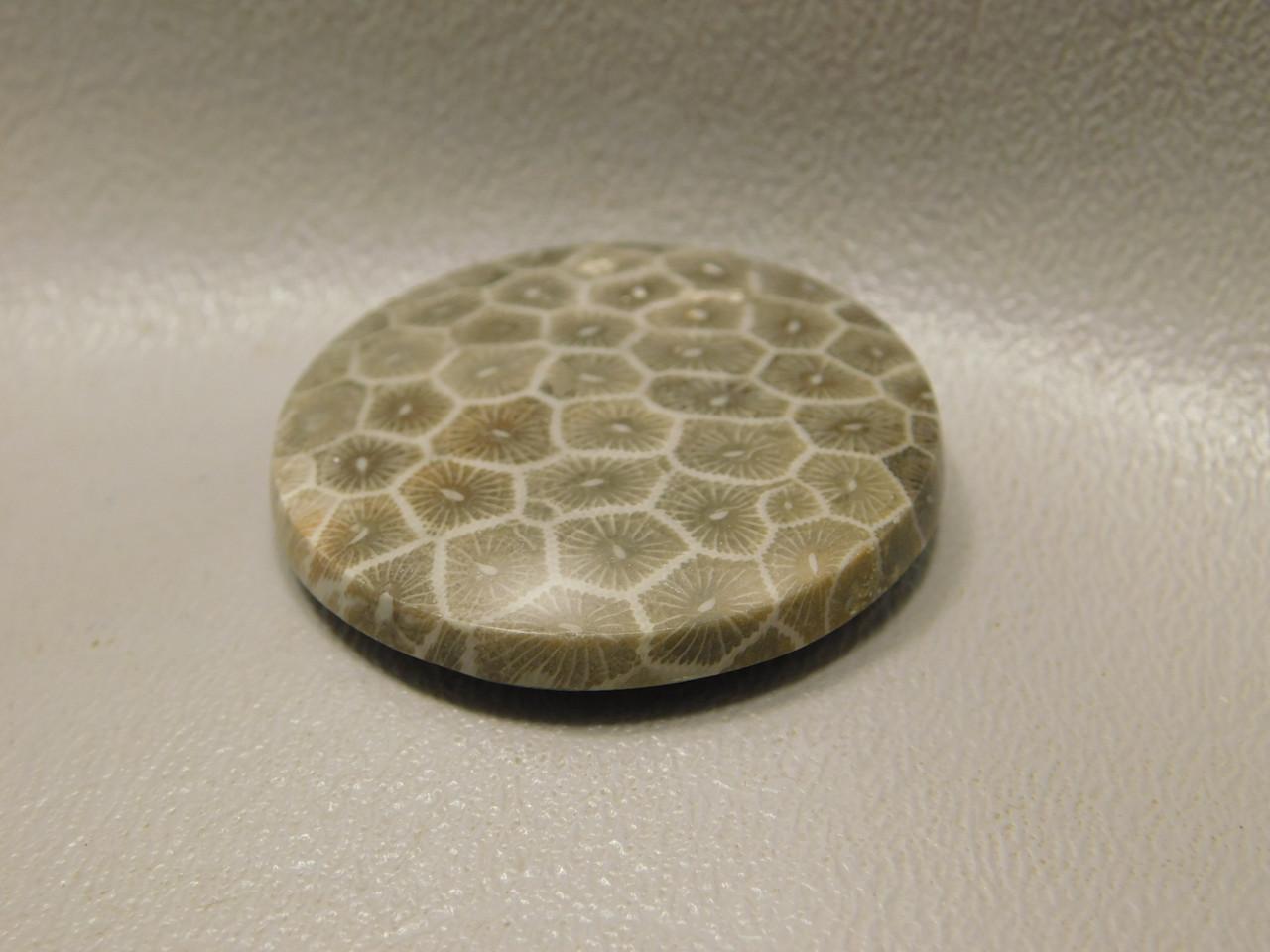 Petrified Coral Semiprecious Gemstone Stone Cabochon #F3