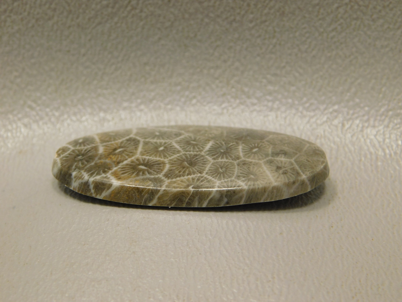 Cabochon Fossil Coral Jewelry Making Supplies #F5