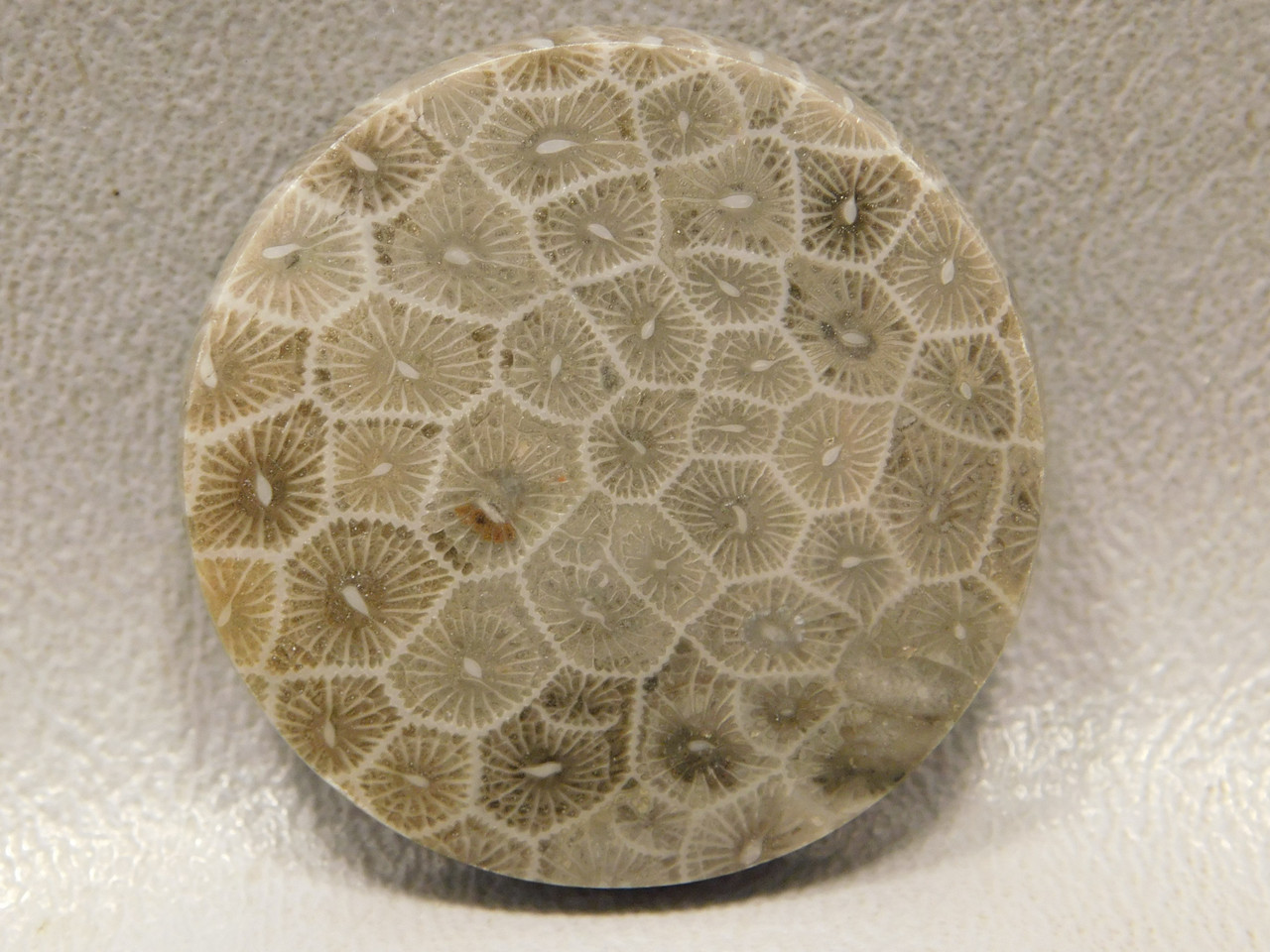 Flower Jasper Cabochon Loose Stones 33 mm Round Fossil #f8