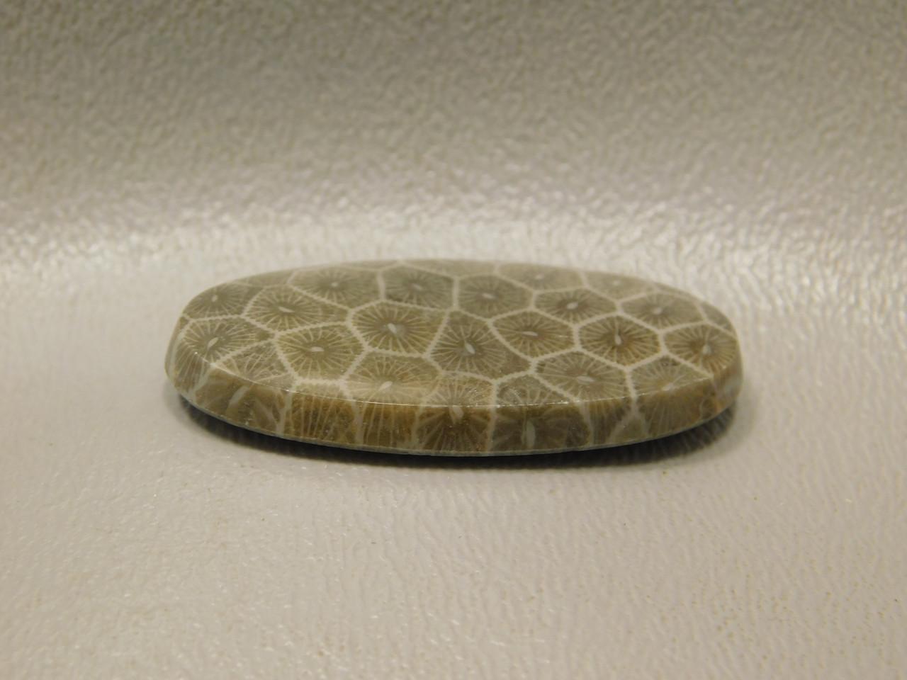 Cabochon Pseudomorph Fossil Coral Jasper #F13
