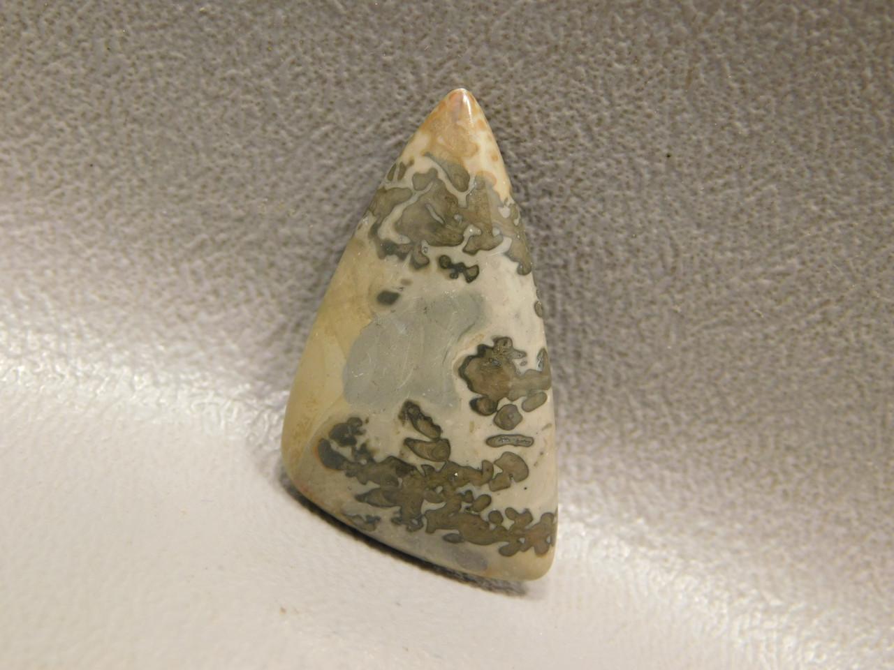 Cotham Marble Cabochon Stone Fossil Stromatolite #16